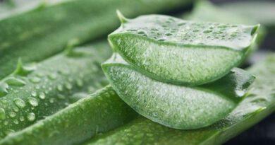 Aloe vera nasıl kullanılmalıdır?