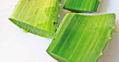 Aloe Vera(Sarısabır) Yağı Nasıl Yapılır, Kullanılır? Cilde Faydaları Nelerdir?