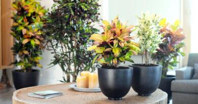 Evde beslenecek faydalı bitkiler nelerdir odanızda veya ofiste kullanabilirsiniz