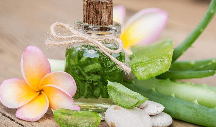 Aloe vera nasıl kullanılır saça nasıl uygulanır kullanımı hakkında her şey!
